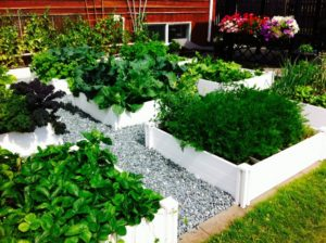 Delightful raised vegetable beds